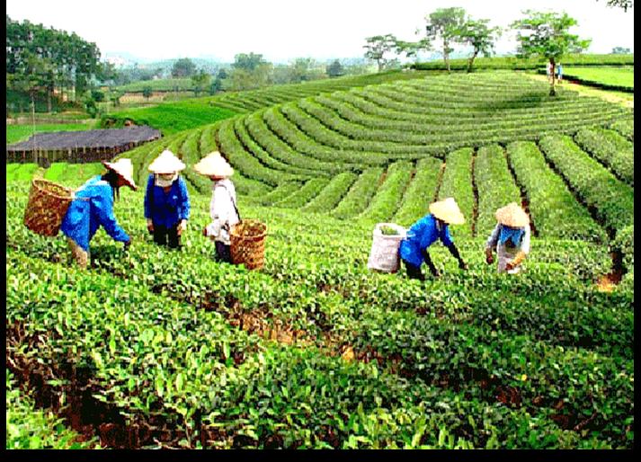 Phát triển đa dạng mô hình kinh tế tập thể, hợp tác xã gắn với giải quyết việc làm cho lao động nông thôn.