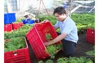Đẩy mạnh hệ sinh thái khởi nghiệp trẻ