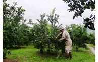 Hòa Bình thực hiện tốt công tác dạy nghề cho hội viên nông dân