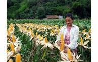 Bắc Kạn nỗ lực tạo việc việc làm, giúp người dân giảm nghèo bền vững