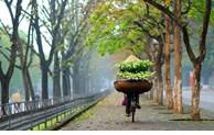 Hà Nội đẹp dịu dàng qua 12 mùa hoa
