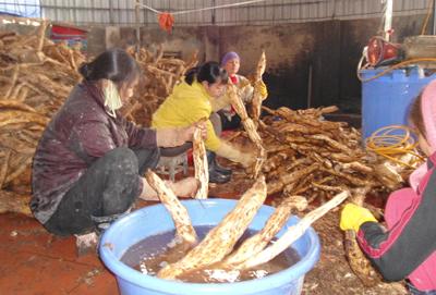 Hưng Yên: Làm kinh tế hiệu quả từ nghề chế biến bột sắn dây