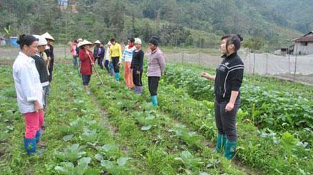 Gần 59.000 lao động nông thôn Hà Giang được hỗ trợ đào tạo nghề theo Đề án 1956