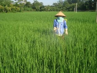 Tăng cường phòng trừ một số sâu bệnh hại trên lúa mùa