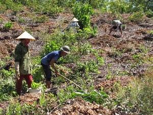 Yên Thế: Diện tích rừng trồng mới đạt 81,4% kế hoạch năm