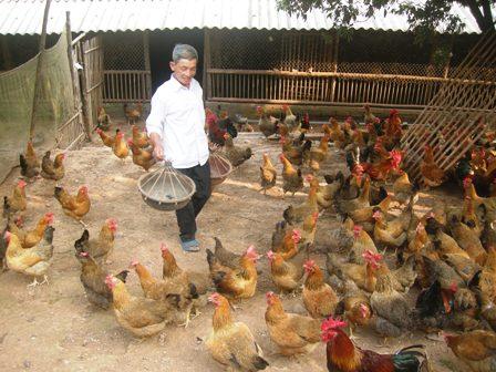 Chăn nuôi tại Huyên Thế tiếp tục duy trì và phát triển