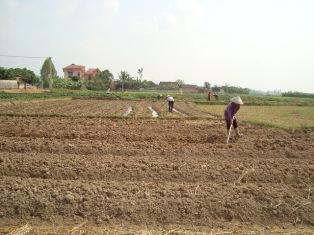 Yên Thế phấn đấu đạt 4.035 ha gieo cấy lúa vụ mùa
