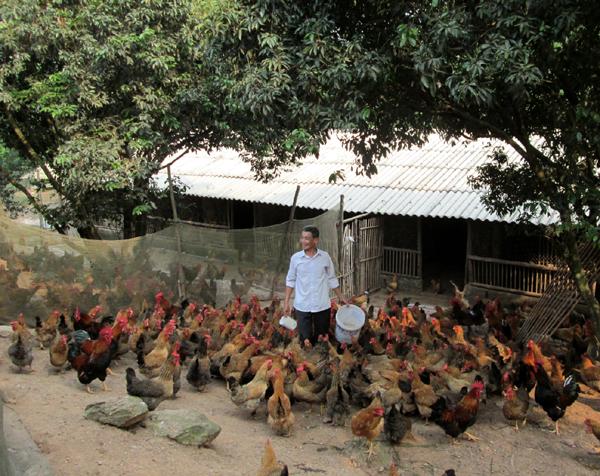 Yên Thế: Đẩy mạnh tiêu thụ sản phẩm gà đồi Yên Thế