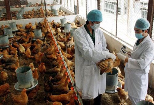 Yên Thế: Tổ chức tiêm phòng bổ sung vắc xin cho đàn gia súc, gia cầm