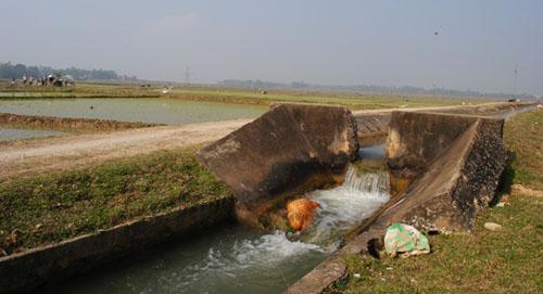 Yên Thế: Chủ động các biện pháp phòng, chống hạn bảo đảm nước tưới vụ Đông Xuân 2014 – 2015